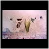 15.gallipoli.1991.panni.stesi.polachrome