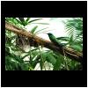4.acquario.genova.colibrì.2003